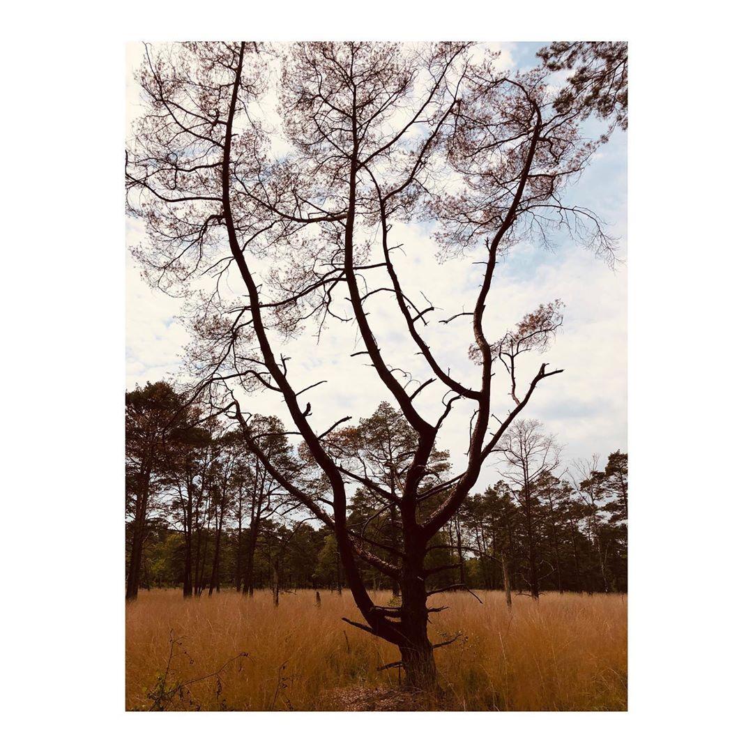 Been outside ....#walkthedog #hamburg #nature #landscape #aroundthecorner #sundayservice #sundays #tree #color