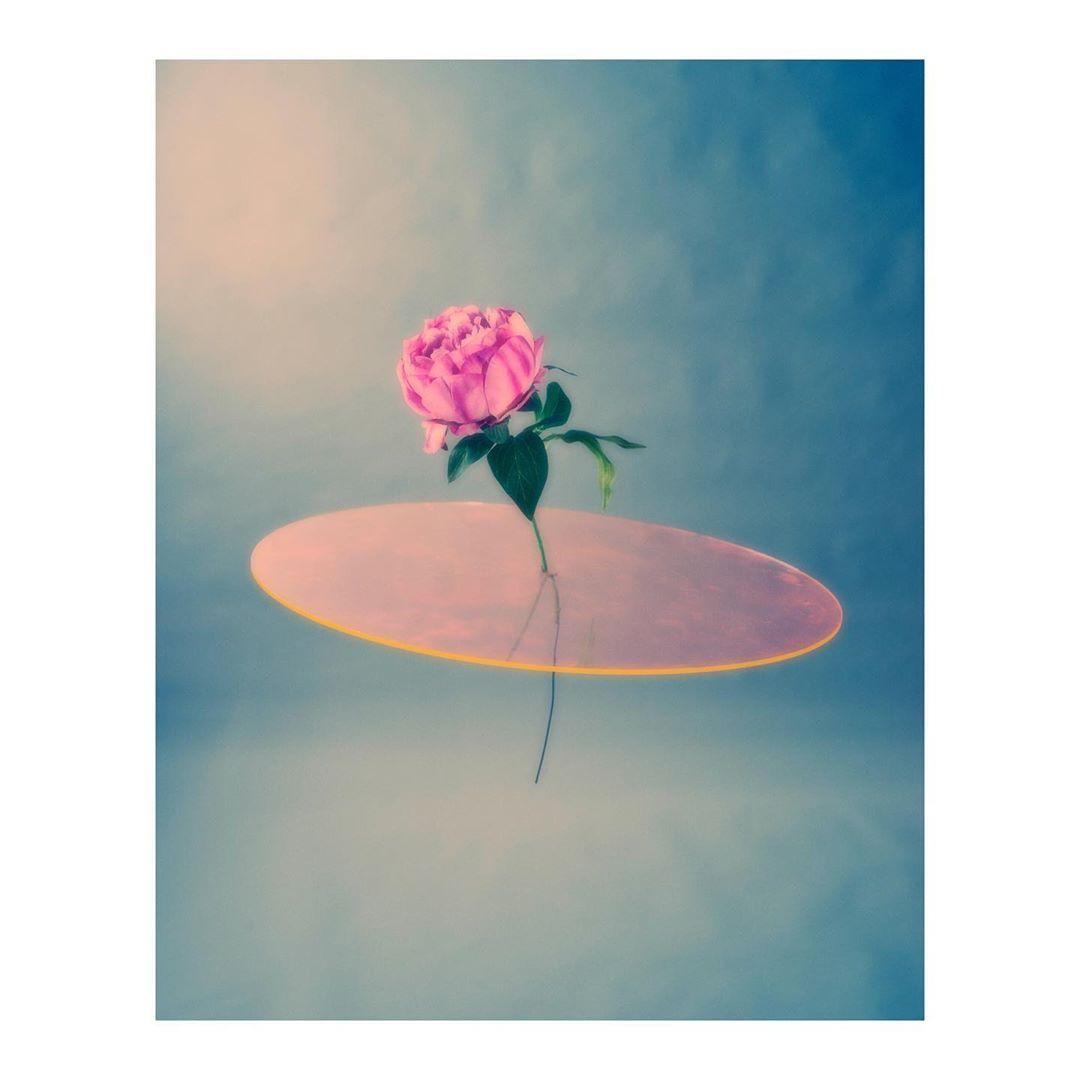 Sketch No.1 ...#personal #flower #stilllife #set #plexi #orange #soft #color #stilllife #photography #friday #weekendfun #photography #photographer
